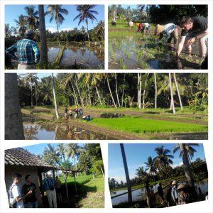 pakeet-wisata-desa-adat-kemiren-banyuwangi