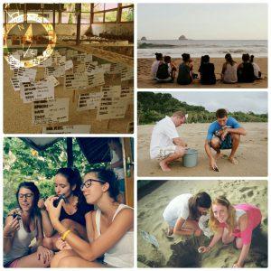 paket-wisata-sukamade-terlengkap-banyuwangi-lovely-banyuwangi